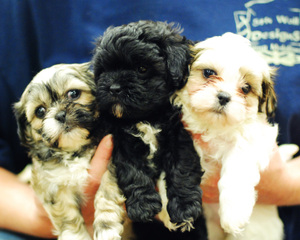 Puppies051_copy